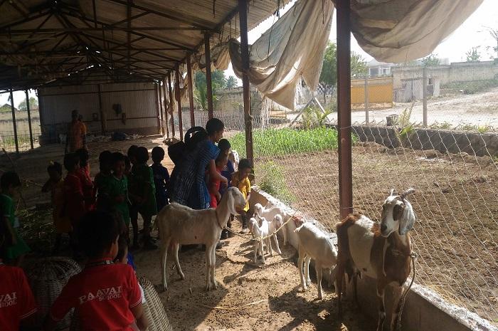 Nursery Visit to Farm